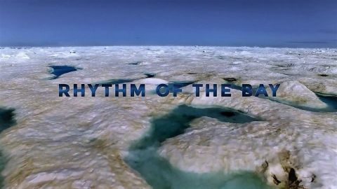 Rhithm of the Bay