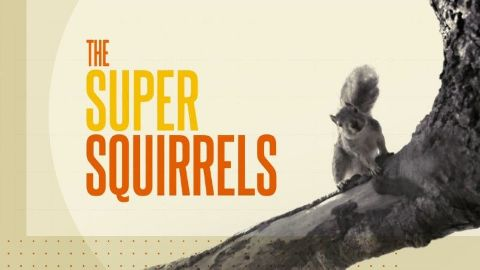 The Super Squirrels