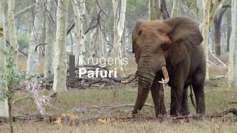 Kruger's Pafuri
