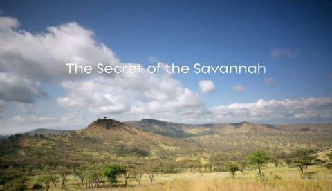 The Secret of the Savannah