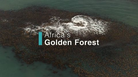 Africa's Golden Forest