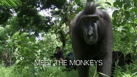 Meet the Monkeys