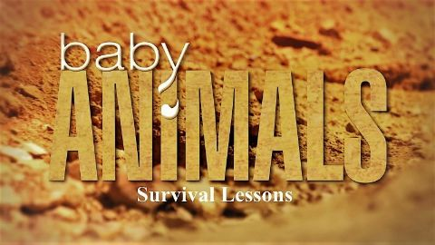 Survival Lessons