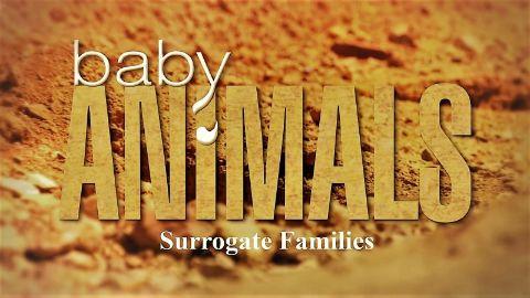 Surrogate Families