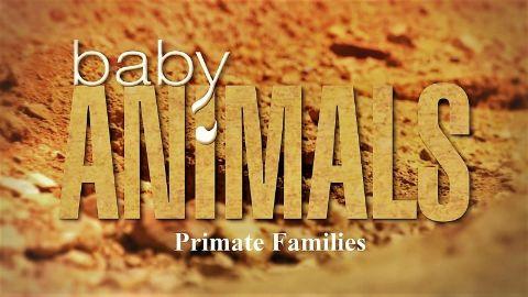 Primate Families