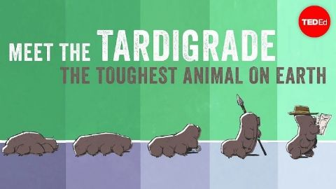 Meet the tardigrade, the toughest animal on Earth