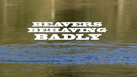 Beavers Behaving Badly
