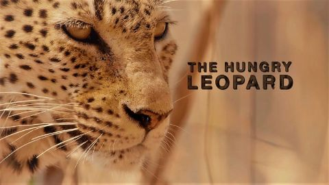 The Hungry Leopard