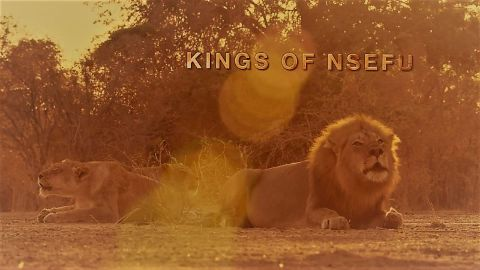 Kings of Nsefu