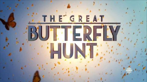 The Great Butterfly Hunt