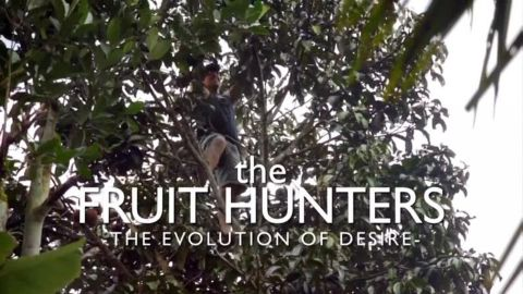 The Fruit Hunters: Evolution of Desire (Part 1 of 2)