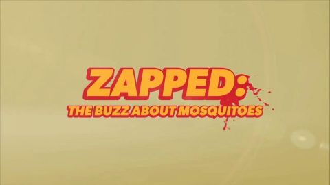 Zapped: The Buzz About Mosquitoes